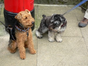 The dogs of Hawes and their masters were especially welcoming