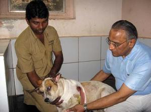 INDIA DOG20