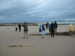 The windswept coast of Northumberland