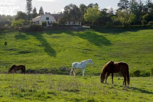 Westwind_Community_Barn_Los_Altos_Hills2