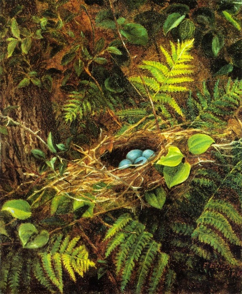 Still Life with Robin's Nest